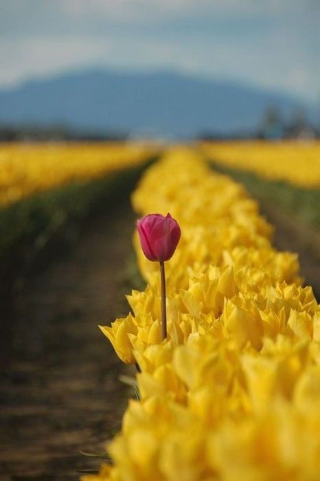 "Romans 12:2 ""Do not be conformed to this world..."".  Dare to stand out, to be different.  :)"