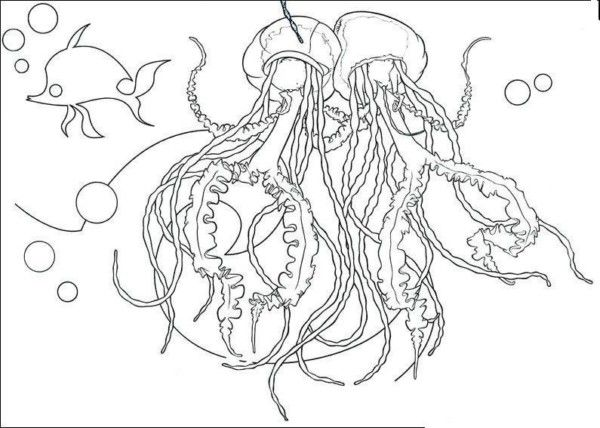 coloring pages jellyfish for craftideas for kids pinterest