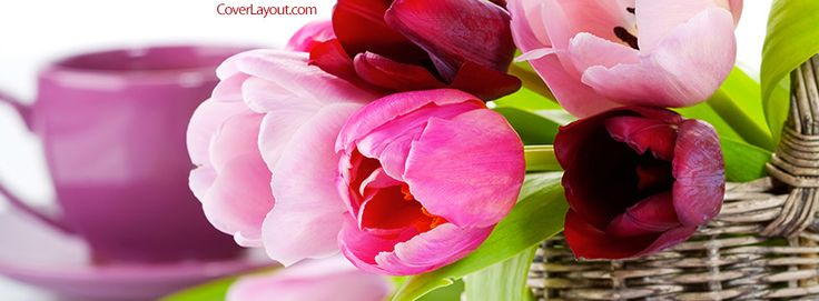 Spring Tulips Facebook Cover CoverLayout.com