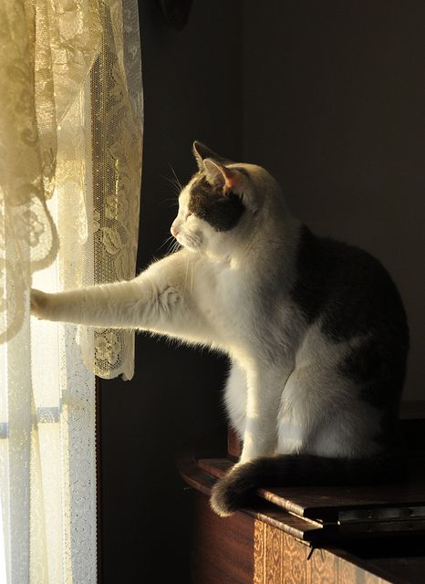 Toby Reaches out to the Light by CaptPiper, via Flickr