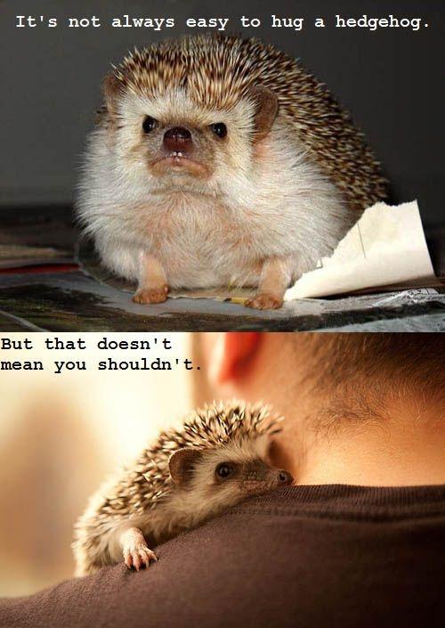 Aww, hedgehog. Love this