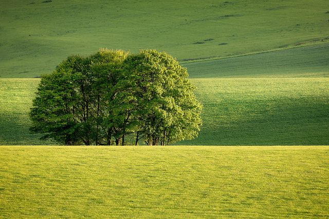 Stanmer Down | Flickr - Photo Sharing!