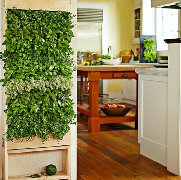 (kitchen inside window well above lemon tree)herb wall inspo