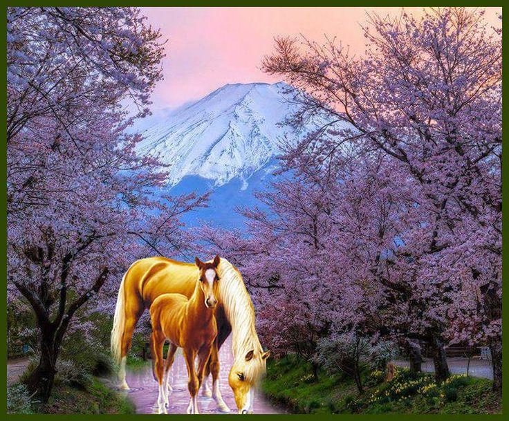Sunset at Mount Fuji on Honshu Island, Japan