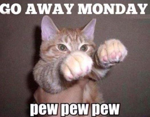 Bagheera the Diabetic Cat can Tolerate Mondays