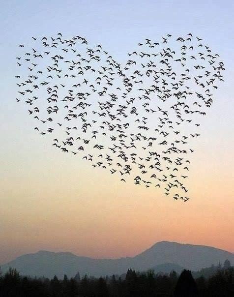 Un nuage d'oiseaux en forme de coeur?!? si c'est pas extraordinaire, un message pour nous? Se connecter à notre coeur?