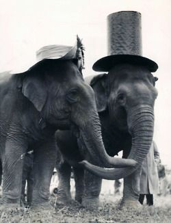 Elephants. S)