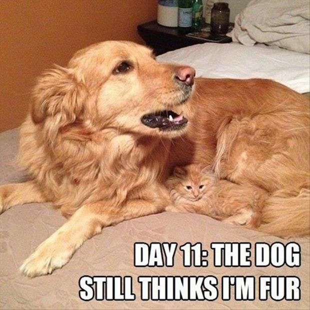 Funny Animals Are Even Funnier With These Captions (30 Pics)