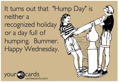funny, hump day, wednesday