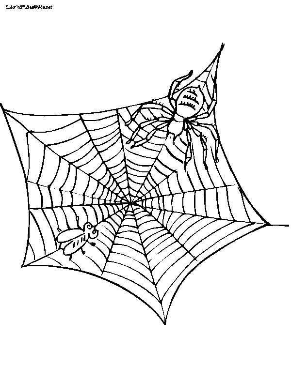 spider web charlottes web coloring sheet coloring pages