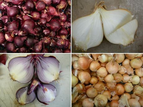 Health Tip - STOP COLD SYMPTOMS WITH ONIONS: Suffering from allergies ...