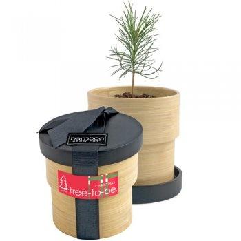 Bamboo Grow-Pot: Christmas Tree