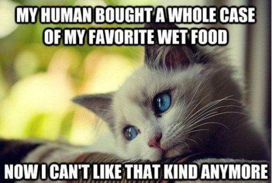 Finicky cats