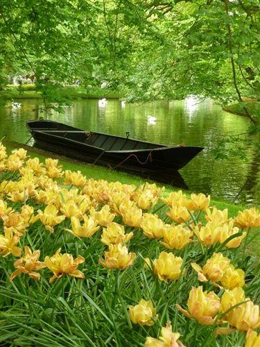 Mindy Schonberg shares this stunning shot of Keukenhof Gardens, the Netherlands.