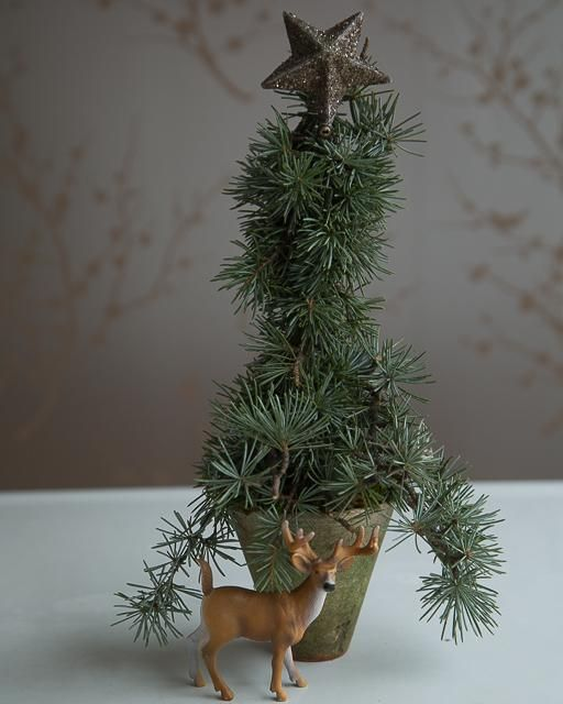 Mini Christmas Tree in a Pot made from leftover pine clippings from a holiday wreath! Day 14: Sweet Paul Holiday Countdown presented by Mrs. Meyer's Clean Day #SweetPaul @mrsmeyersclean #HomeGrownInspiration