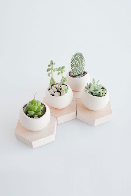 hex spora planters