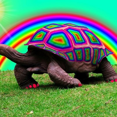 reminds me of a turtle named miles from a tv show named parenthood