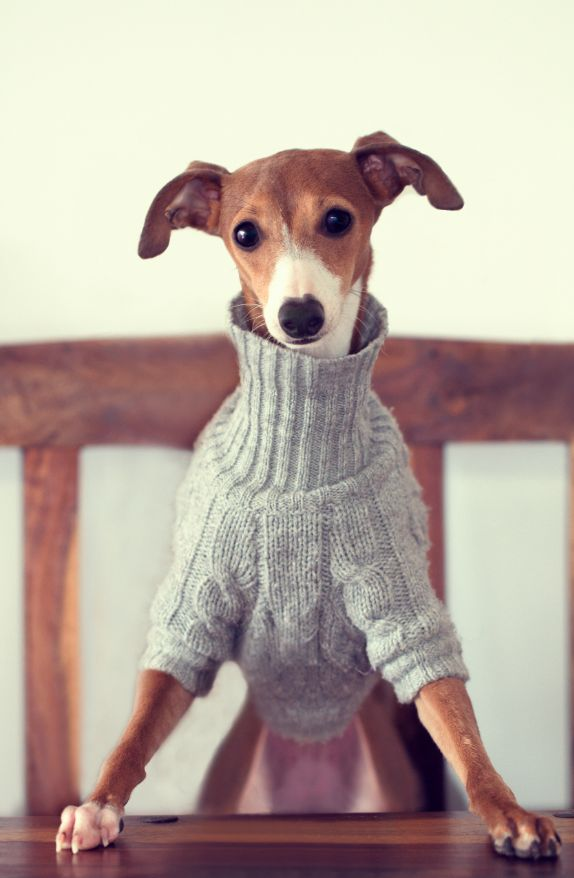 love the sweater and the face !