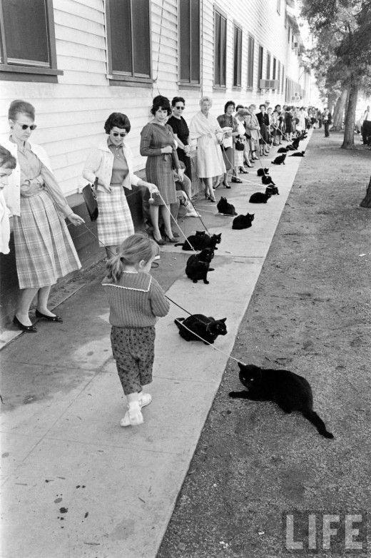 Crazy cat lady secret society.....