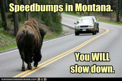#Montana speedbumps:)