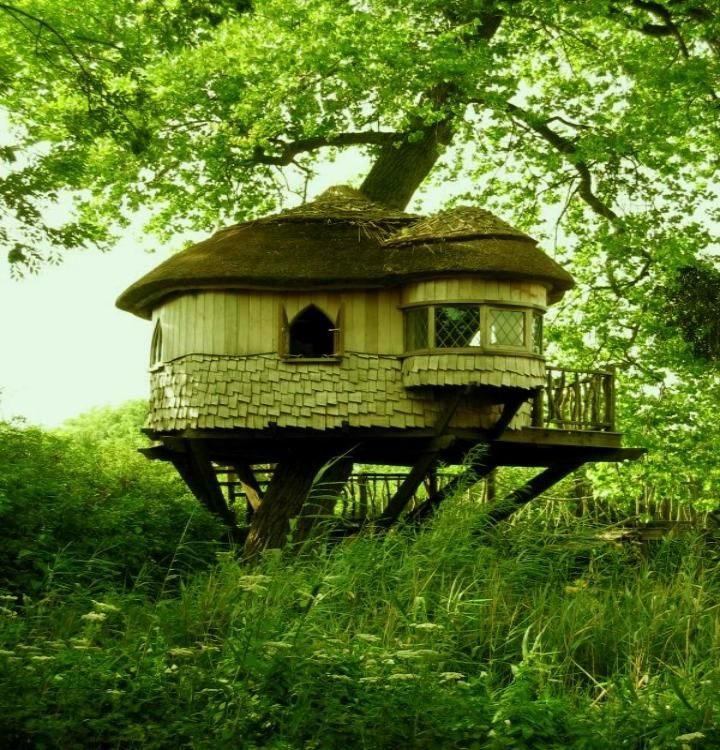 Madikwe Game Reserve. Amazing tree-house lodging is a fantastic eco-friendly idea.