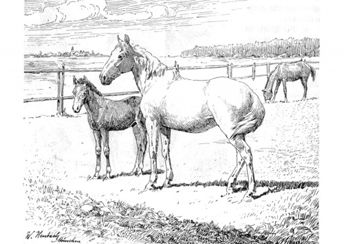 free printable realistic horse coloring pages images amp pictures