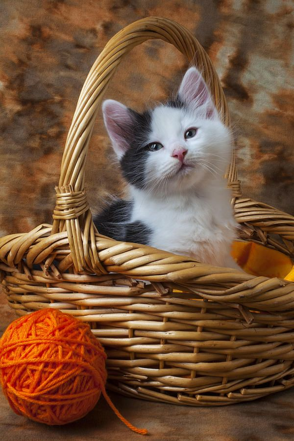 Sittin' in a basket