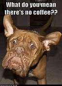 NO COFFEE???? Dog