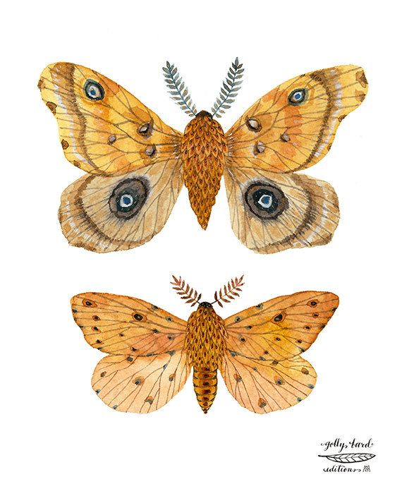 silk moth colouring pages