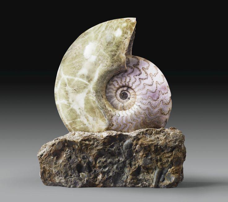 Ammonite Eparietites, Scunthorpe, Bas Jurassique-North Lincolnshire, Angleterre | Lot | Sotheby's