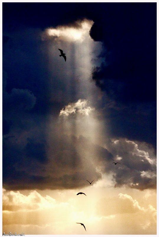Heavenly Birds by Asival