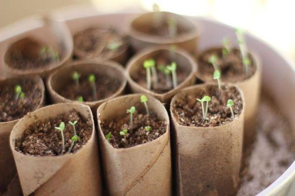Rotolo della carta igienica: contenitori fai da te per coltivare