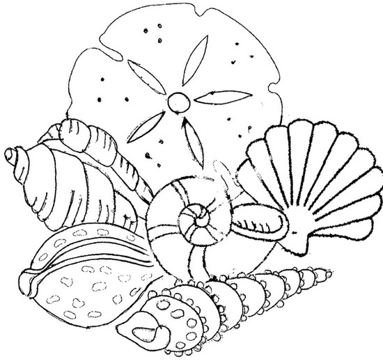 sea shell coloring pages williamb duckdns org