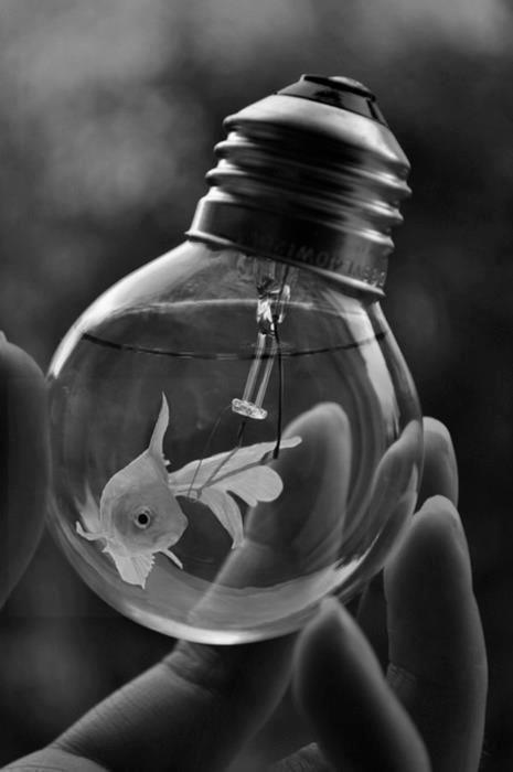 Goldfish Bulb.