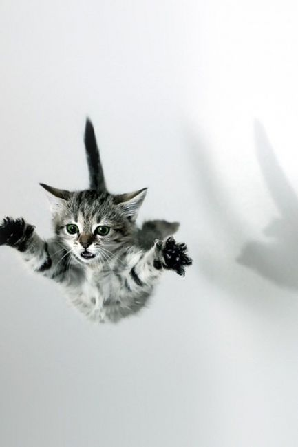 roar | falling | jump | kitty cat | cute | black white | rebel | flying | fall | leap | cat | 9 lives | funny