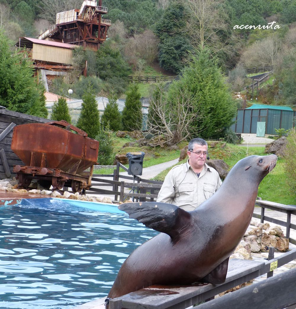 Cabaárceno. Espectáculo de los leones marinos