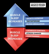 The importance of sleep in building muscle and staying healthy