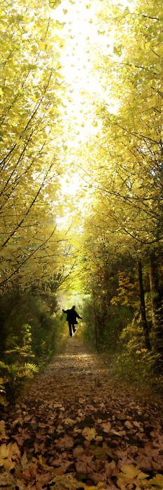 Woodland passeggiata