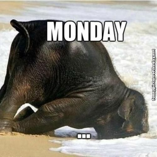 Funny Monday Humor Elephant Face First In The Water