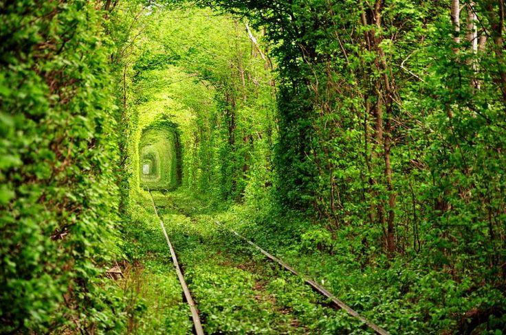 Tunnel di alberi-Rivne, Ucraina