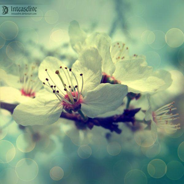 Shimmers of spring by Inteaselive.devia... on @deviantART