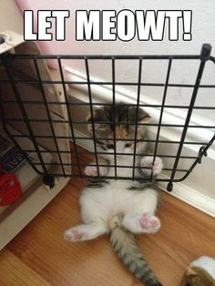 Funny Pictures Of Cats (21 Pics)