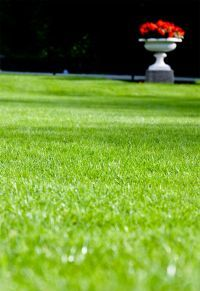 HOW TO; Overseed your lawn for a Healthy Green Lawn!