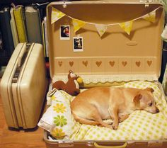 Suitcase Dog Bed?  Well, maybe if I had a dog... and IF John would let me keep it in the house!