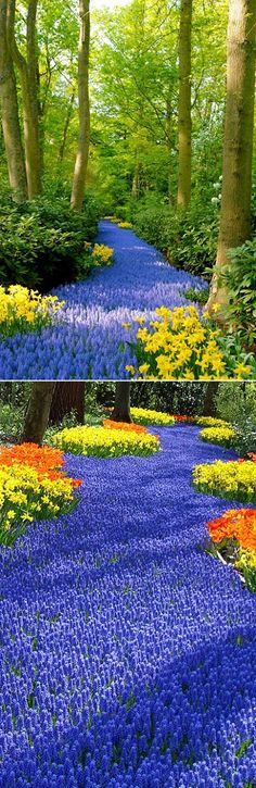 We should go see this Holland's Flower Garden - Thank you pinterest for nearly plunging me into spring fever !!!!