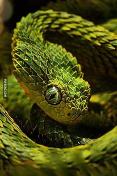 Photogenic snake