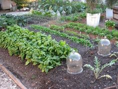 Make use of cloches for protecting plants in the fall garden.   Photo by Susan Reimer under the Creative Commons Attribution License 2.0.Click To Enlarge