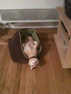 @Kim O'Rourke's kitty, Seamus!