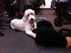 Harper and his stuffed animal friend