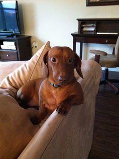 @Christopher Adams' doggy!